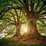 High Quality Tree