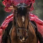 Foto Kuda